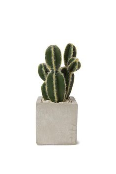 This cement base pot plant is the instant solution to a lack of greenery! And you never have to worry about over watering or under watering! <br> Made from cement and plastic. <br> Dimensions: 17cm H x 7cm W. <br/>