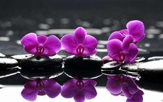 ¿QUÉ SON Y PARA QUÉ SE UTILIZAN LAS FLORES DE BACH? Las Flores de Bach son unos preparados florales artesanales que se utilizan como terapia alternativa para tratar distintas afecciones emocionales…