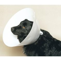 Buster Disposable Collar - 12.5 cm - http://www.thepuppy.org/buster-disposable-collar-12-5-cm/