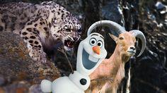 Você quer brincar na neve... com um LEOPARDO? noticias bizarras, videos...