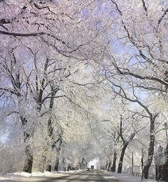 "Slatish™  ""Winter road"""