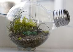 Head over to The Hipster Home for this DIY tutorial to make your very own terrarium in a light bulb . My mom used to have several terrariums back in the and I was fascinated by the tiny ecosystems. Mini Terrarium, Light Bulb Terrarium, Terrarium Containers, Terrarium Plants, Fairy Terrarium, Succulent Terrarium, Water Terrarium, Terrarium Centerpiece, Diy Hacks