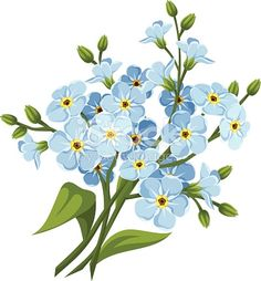 Flower clipart images, free flower clipart, forget me not tattoo, Flower Clipart Images, Free Flower Clipart, Vector Flowers, Botanical Flowers, Botanical Art, Illustration Botanique, Illustration Blume, Free Vector Graphics, Free Vector Art