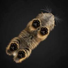 A cat from below