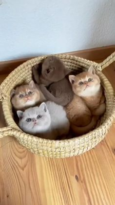 Cute Wild Animals, Baby Animals Pictures, Cute Animal Photos, Cute Animal Videos, Cute Little Animals, Cute Funny Animals, Animals Beautiful, Animals And Pets, Cute Little Kittens