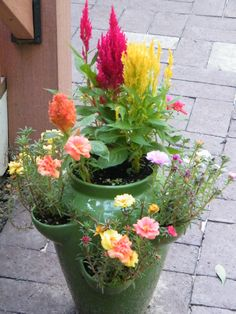 Strawberry pot from Patty P. filled with Portulaca and Celosia Strawberry pot from Patty P. filled w Container Flowers, Container Plants, Container Gardening, Strawberry Planters, Strawberry Garden, Celosia Flower, Beautiful Gardens, Beautiful Flowers, Outside Decorations