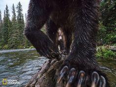 Las fotos más alucinantes de animales salvajes están en National Geographic | The Creators Project