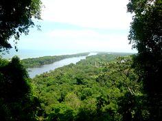 The jungle at Tortuguero. Costa Rica.