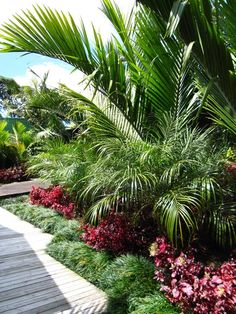 Wholly Wild Relatively easy Tropical Garden: The key to effectively Growing Pile. - Wholly Wild Relatively easy Tropical Garden: The key to effectively Growing Piles of Grocery the Su - Tropical Backyard Landscaping, Landscaping Around Pool, Palm Trees Landscaping, Florida Landscaping, Plants Around Pool, Pool Plants, Landscaping Ideas, Small Tropical Gardens, Tropical Garden Design