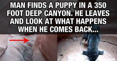This Guy Finds A Puppy In A 350 Foot Deep Canyon, And Comes Back To Rescue It. You made my list of Beautiful Creatures...Because that you both are... Thank you so much for saving Ryley.