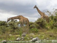 Kenya Family Safari - Rate: From US$1,568.00 per person sharing for 5 Nights