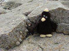 Erwin in der Bretagne.