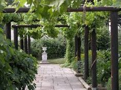 Image result for elegant pergola walk