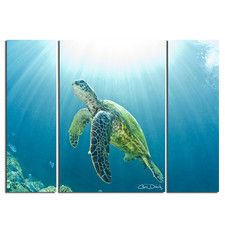'Sea Turtle' by Christopher Doherty 3 Piece Photographic Print on Wrapped Canvas Set