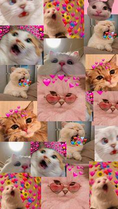 Iphone Wallpaper Cat, Funny Cat Wallpaper, Cute Panda Wallpaper, Bear Wallpaper, Cute Patterns Wallpaper, Cute Disney Wallpaper, Cute Cartoon Wallpapers, Cute Kawaii Animals, Cute Little Animals