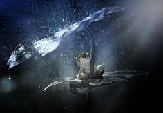 Une fois que la pluie commence à sabattre ces 20 animaux font preuve de beaucoup dingéniosité