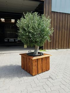 ber ideen zu olivenbaum auf pinterest gartenhaus. Black Bedroom Furniture Sets. Home Design Ideas