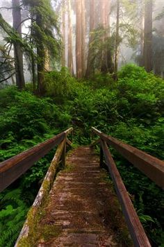 Del Norte Redwoods State Park, California