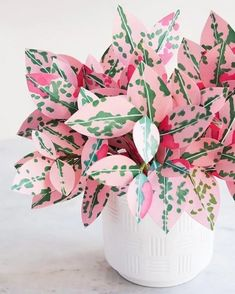 house plants 530369293617348381 - Paper Chinese Money Plant DIY — The Apple of My DIY Source by montyorkay Best Indoor Plants, Cool Plants, Potted Plants, Garden Plants, Indoor Cactus, Succulent Plants, Cactus Plants, Hosta Plants, Indoor Herbs