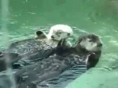 Otterly in Love by Ahmad827 | looplr.com