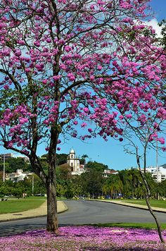 Parque do Flamengo - Rio de Janeiro - Brasil - Foto: Alexandre Macieira | Riotur