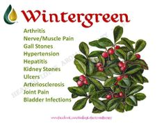 Young Living Essential Oils: Wintergreen