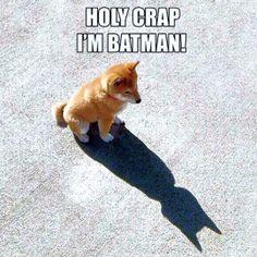 Holy Crap, I'm Batman!