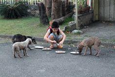 Un niño de 9 años logra crear una pequeña protectora de animales en su garaje | SrPerro.com, la guía para animales urbanos.