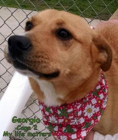 Meet 02  Georgia, a Petfinder adoptable Collie Dog | Canton, OH | Picked up as a stray on 4/18.  Available on 4/22.  We thought for sure there would be people...
