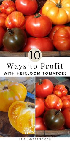I've always been a tomato junkie, so when I found myself with a 1/4 acre of tomato plants, and more heirloom tomatoes than my family or friends could ever eat - I got creative. There are so many ways you can make some really helpful extra income, even by just growing an extra row or two of tomato plants. From selling seedlings, to saving seeds, to selling bulk tomatoes to folks looking to can and freeze tomato sauce, here are 10 idea to help you turn tomato gardening into real cash. Raising Rabbits For Meat, Meat Rabbits, Freezing Tomatoes, Growing Tomatoes, Tomato Garden, Tomato Plants, Organic Gardening, Gardening Tips, Saving Seeds