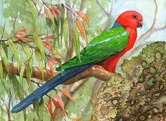 King Parrot Mosaic Birds, Parrots, Hummingbird, Mother Nature, Painting & Drawing, Watercolour, Art Ideas, Exotic, Colours