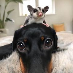 Two cuties . Unusual Animal Friends, Unlikely Animal Friends, Unusual Animals, Animals And Pets, Baby Animals, Funny Animals, Cute Animals, Beautiful Dogs, Animals Beautiful