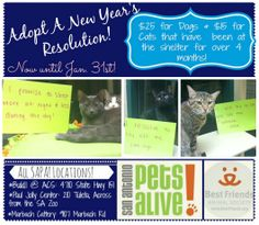 Adopt a NY Resolution!