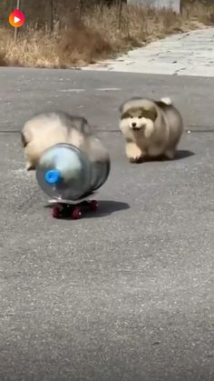 Funny Animals, Cute Animals, Mothers Love, Funny Moments, Slime, I Laughed, Father, Creatures, Puppies
