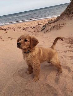 Cute Dogs And Puppies, I Love Dogs, Doggies, Tier Fotos, Cute Little Animals, Cute Animal Pictures, My Animal, Funny Animals, Dog Lovers