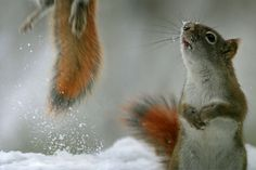 Squirrel :: Fight to the Top by *MichelLalonde on deviantART