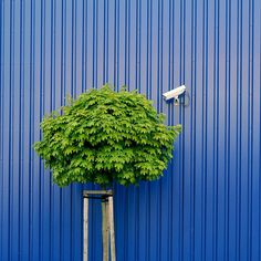 Tree watching by IKEA security by Heidelknips, via Flickr