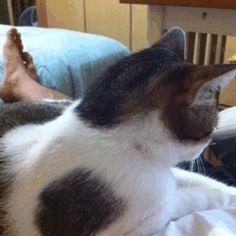 Cama hamburguer para gatos - O Verso do Inverso