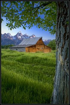 early morning along Mormon Row in Grand Teton National Park in Wyoming.one of most photographed barns in the world)