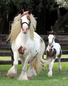 24739be8c 40 Best Circus Horses images