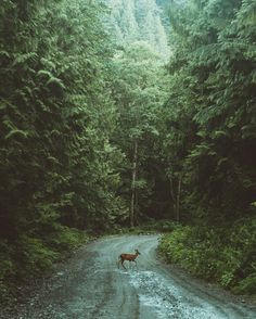 early morning trek in the forest of British Columbia Canada. by Berty Mandagie #xemtvhay