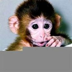 Funny Cute Monkey - Bing Images