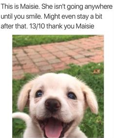 50 Cute & Funny Dog Memes That'll Get Your Tail Wagging Dogs say or think the darndest things. Here are some possible thoughts your dog may have. Cute Funny Dogs, Funny Dog Memes, Funny Animal Memes, Cute Funny Animals, Funny Animal Pictures, Funny Photos, Cat And Dog Memes, Funny Kitties, Adorable Kittens
