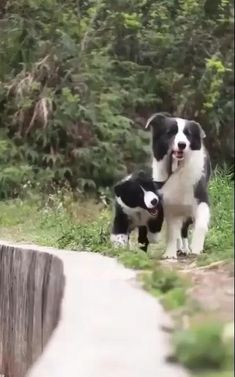Cute Funny Animals, Cute Baby Animals, Animals And Pets, Nature Animals, Wild Animals, Cute Dogs And Puppies, Pet Dogs, Doggies, Funny Dog Videos