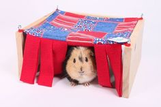 Guinea pig hammock with tent. People should have these for themselves, too.