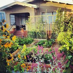 lawn-garden