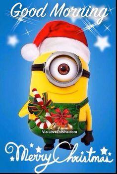 Good Morning Merry Christmas Christmas Memes Funny Minion Christmas Merry Christmas Minions