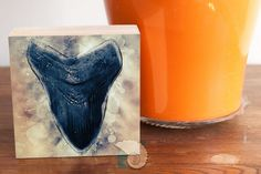 """Shark tooth megalodon tooth art box 4 x 4 Father's Day gift coastal decor home decor wall decor shelf decor gift for diver by CoastalFocusArt 