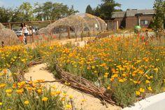 delimitador de canteiro   Children`s Museum of Sonoma County (CMOSC), Mary`s Garden   Santa Rosa, USA   BASE Landscape Architecture
