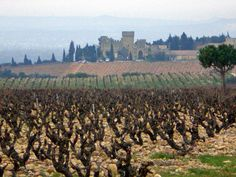 Provence, Saint Saturnin, French Trip, Vaison La Romaine, Chateauneuf Du Pape, Wine Cellars, West Village, French Riviera, Grape Vines
